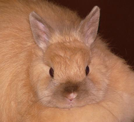 Honey.Bunny
