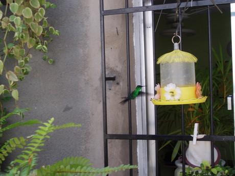 kolibřík,nejmenší pták na světě