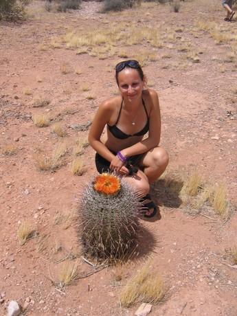 Nejkrasnejsi kaktus sveta