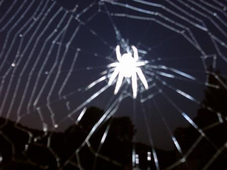 To je drsná fotka, protože ta pavučina vypadá jak rozbitý sklo, ale jinak tvor, který mi nahání ze všeho největší hrůzu...
