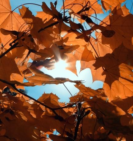 sun through the autumn