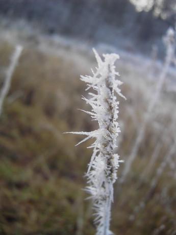 Omrzlá tráva...