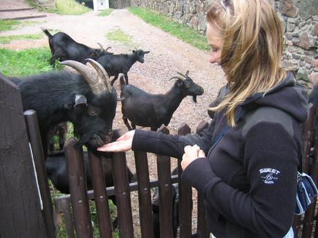 na Potštejně mají kozy, zrovna měly mladý, tak jsme je nakrmili
