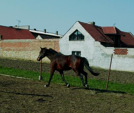 zanyska-91
