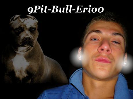 9Pit-Bull-Erio0
