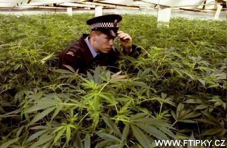 Česká policie při hledaní drog !811! !811! !811! !811! !1423!