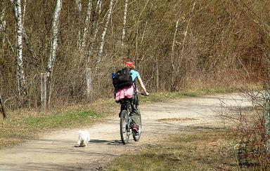 wildhitchhiker