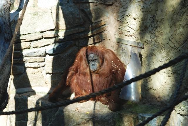 obcas mam i opici