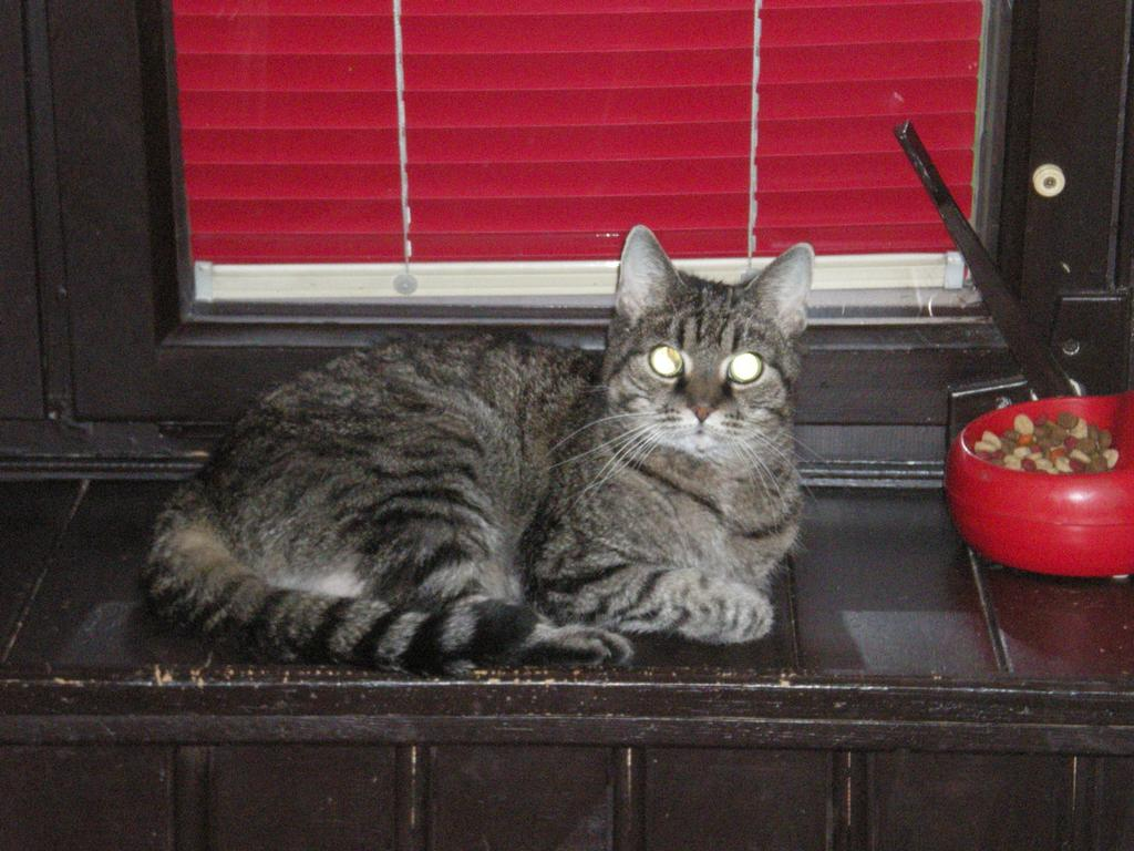 Kočička moje  už 20let jí je taky frajerka !175!