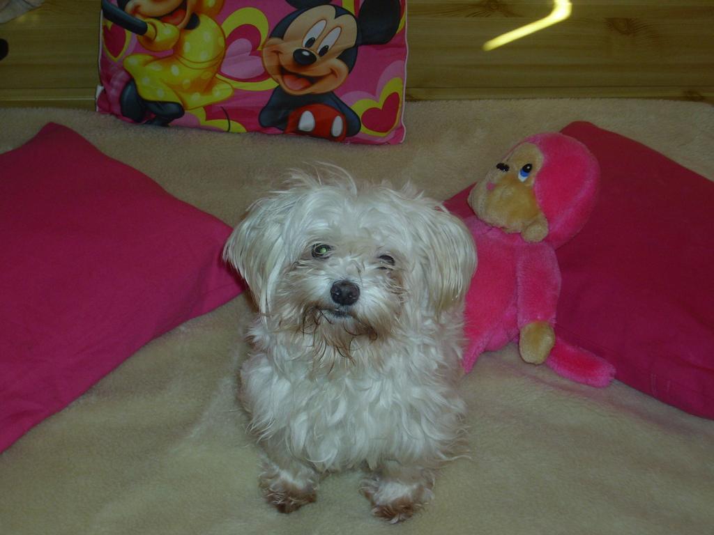 Každá správná Barbie odbarvená Blondie má mít kabelkového psa, ne? Já ho mám. Mufííí !11!