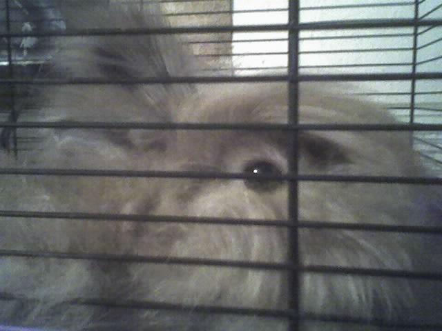 můj králík Jeny !11!