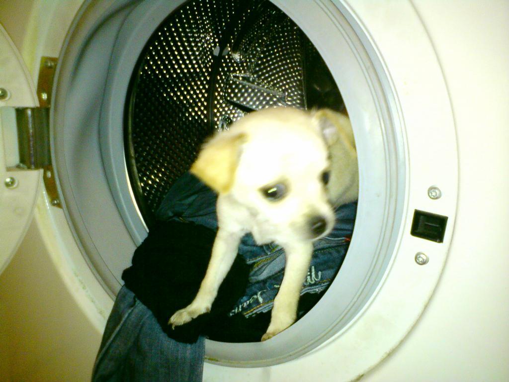 Jessinka v pračce..  schovka jako blázen :-)