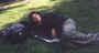 Pohodička v trávě:)