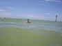 CLEARWATER BEACH FLORIDA ))...