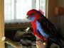 můj papoušek :-)