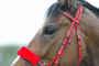 my little pony......:-)