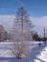 Zimí krajina zachycena O. C-150