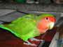 "můj papouch...<img src=""http://smiles-web.wz.cz/smiles/zviratapotvoryv/111.gif"">"