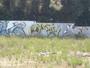 spanelsky grafity