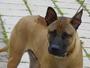 To je nejhezčí pes na světě:)