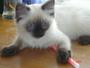 Můj kočičí miláček: Bonnie...