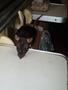 potkanice Mortis(pro ty méně zběhlé...