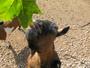 mufínek... zoo jihlava